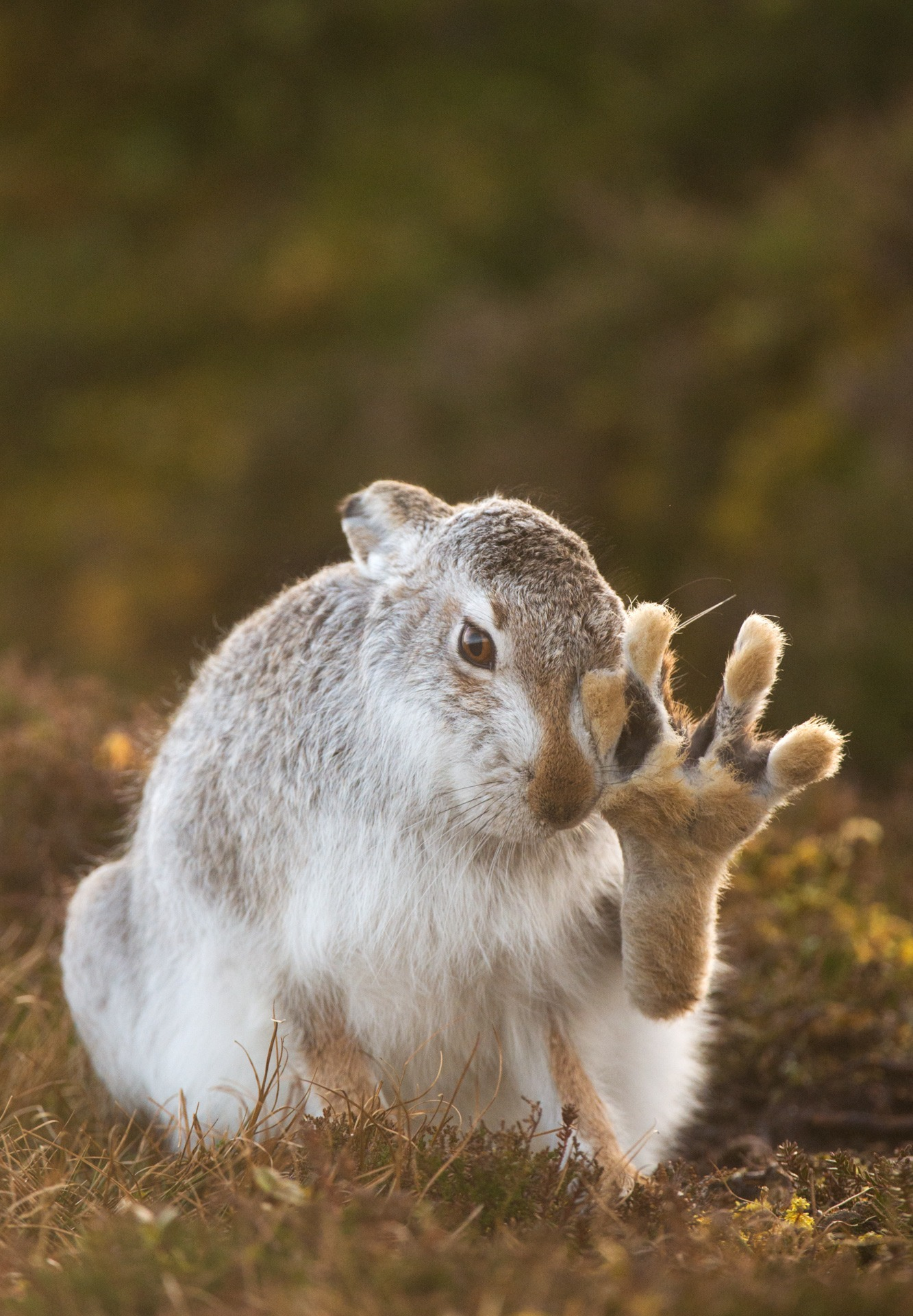 C9_3 Andrew Parkinson High five Nature Photographer of the Year 2017