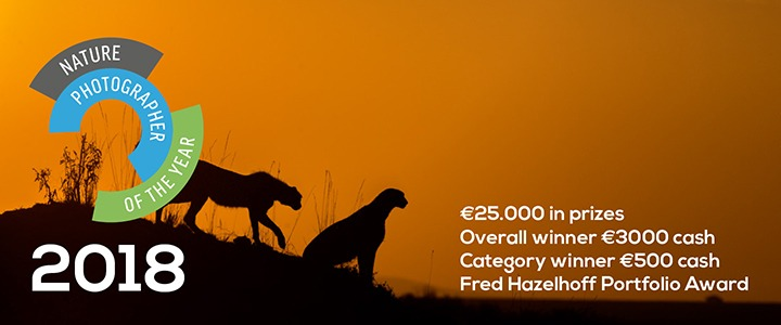 nature_photographer_of_the_year-npoty-cheetahs-photography_contest-photography_competition-nature_photography_competition
