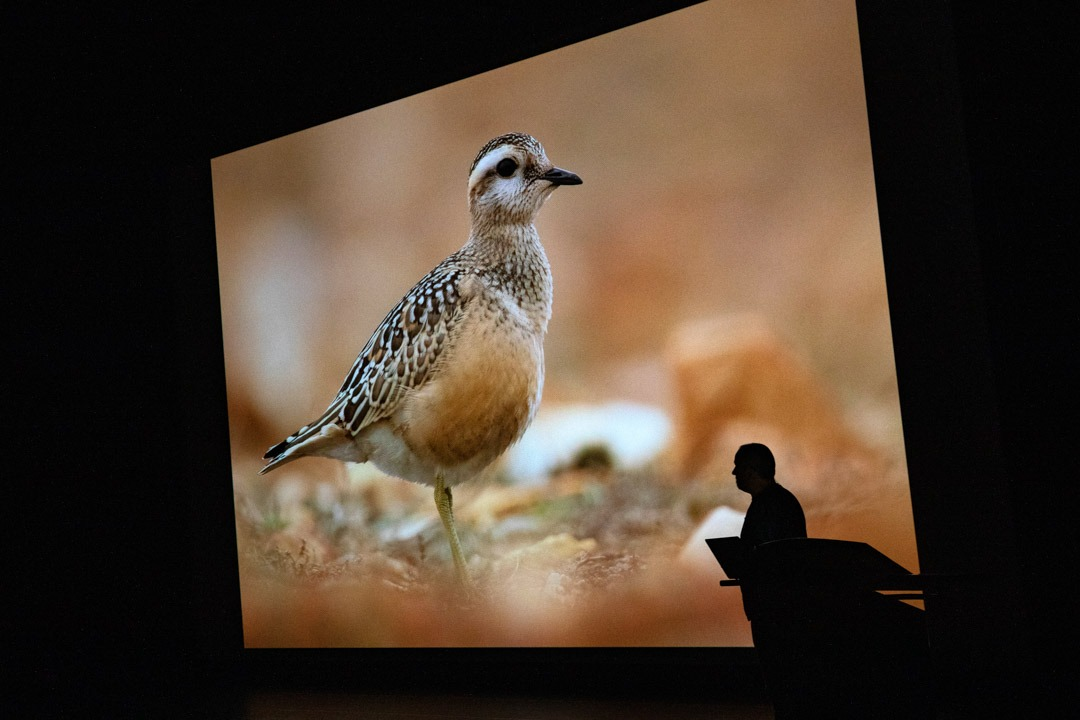 Wim_Wilmers_Nature_Talks_Photo_Festival-natuurfotografie